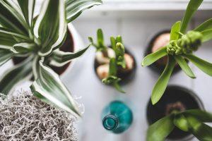 plants self love and healing lichen livin