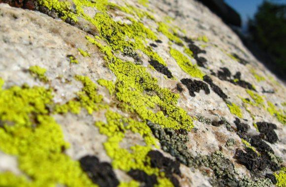 neon_green_lichen_by_thartwig-d3gostp